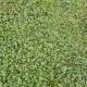 GrassGreen0200