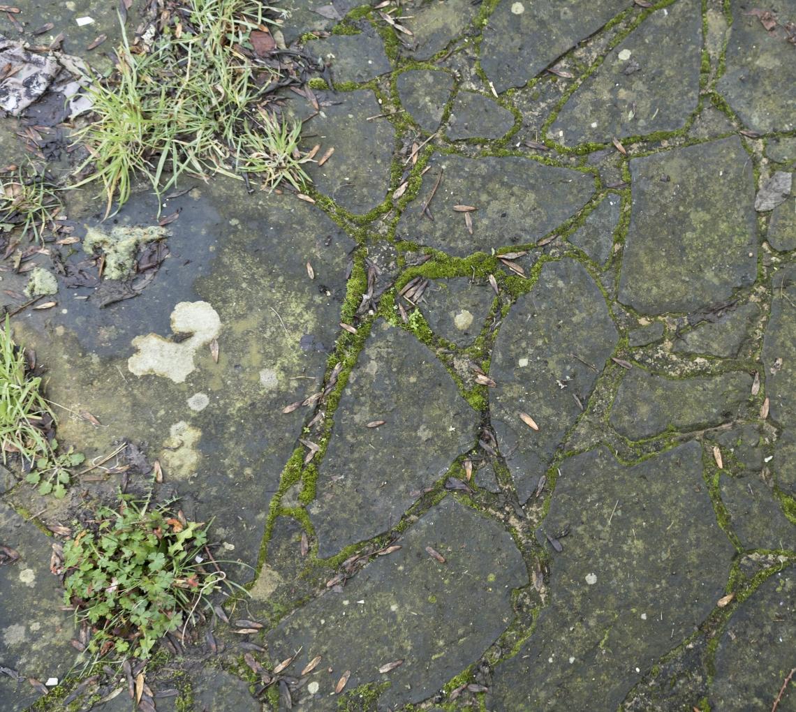 Ground Stoney 0142