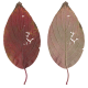 Nature Leaves_0085