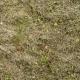 Grass Dead