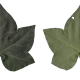 Nature Leaves_0086